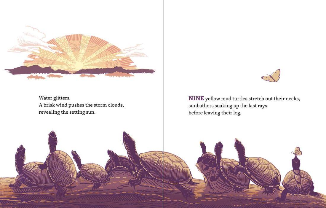 turtle spread.jpg