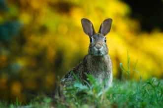 bunny rabbit alert