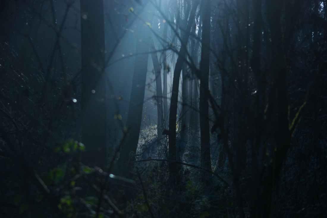 light coming through dark trees